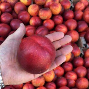 nectarine in hand